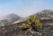 2018 01 12 carta per la lotta incendi boschivi nella regione abruzzo